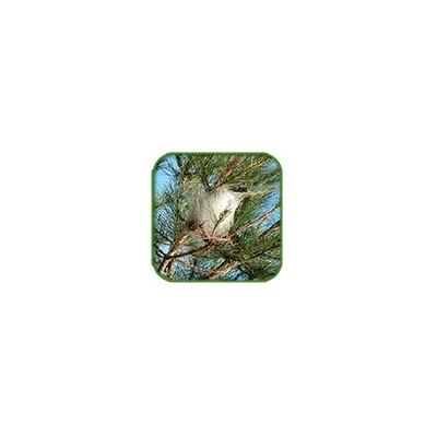 Eco Piège pour Chenilles - 30 cm